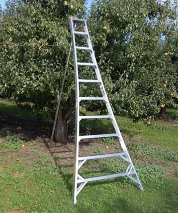 Where to rent LADDER, STEP 12  ORCHARD WOOD in Portland OR, Gresham OR, Beaverton OR, West Linn OR, Happy Valley OR, Vancouver WA